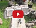 Aivars-K, akmens apstrāde video