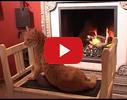 Alus krodziņš, krodziņš video