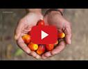 D.eco cosmetics video