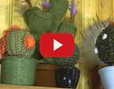 Kaktusu māja video