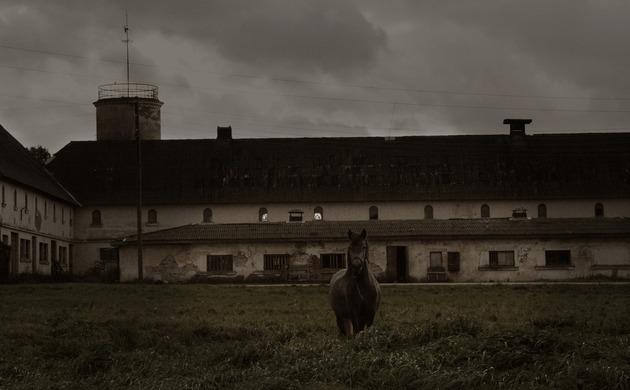 zirgs_ponijs.jpg