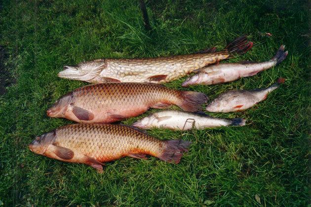 brivdienu-maja-pilskalni-makskeresana-zivis.jpg