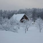 ziema_lilaste.jpg