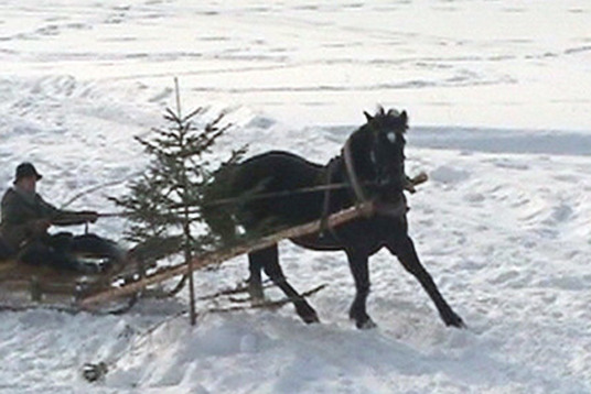 Horse cart winter competitions Z/S