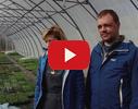 Puķu lauki, SIA, stādaudzētava video