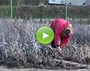 Pūres dārzkopības izmēģinājuma stacija, A/S  video