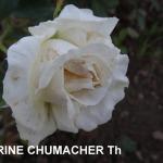 corinne-schumacher.jpg