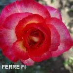 leo-firre-(2).jpg