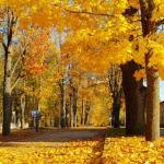11-oktobris-rudens-iela.jpg