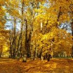 11-oktobris-rudens-pils.jpg