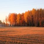 2015. gada rudens. Abavas senleja. Foto: Jānis Kamerāds.